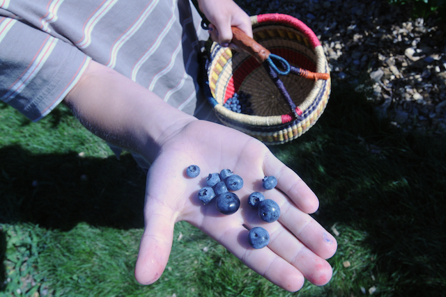 Blue (1)