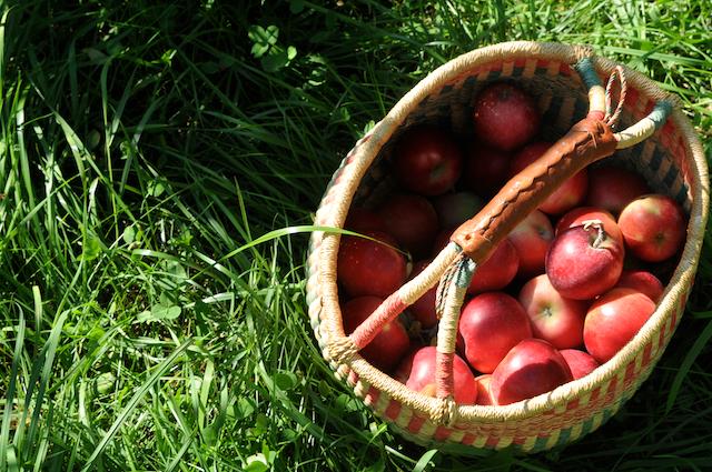 Apples (5)