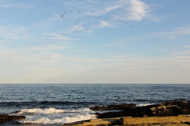 Shore (3)