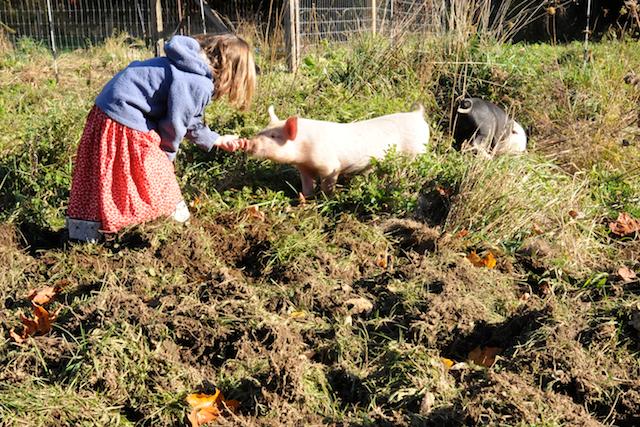 Pigs (2)