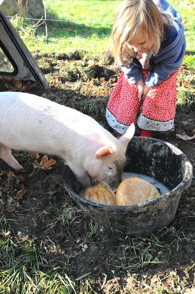 Pigs (1)