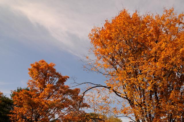 Autumn (3)