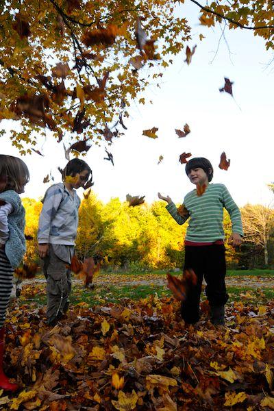 Autumn (6)