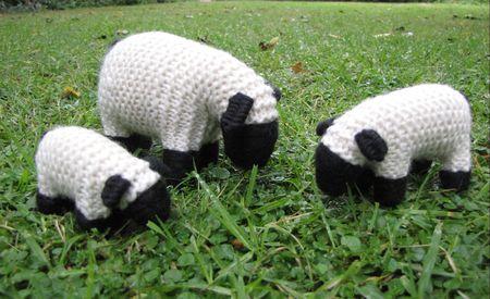 Shop Photo, Suffolk Sheep