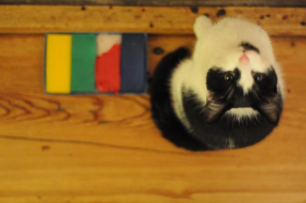 Pipercat