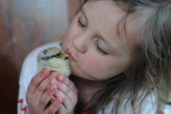 Chicks (10)