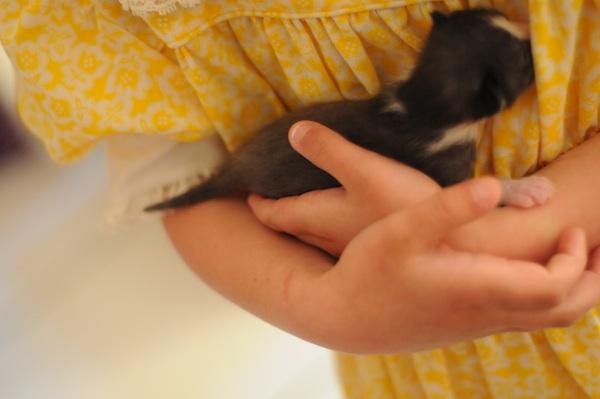 Kittens (4)