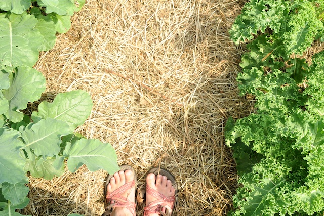Garden (8)