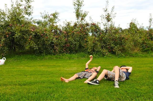 Apples (4)