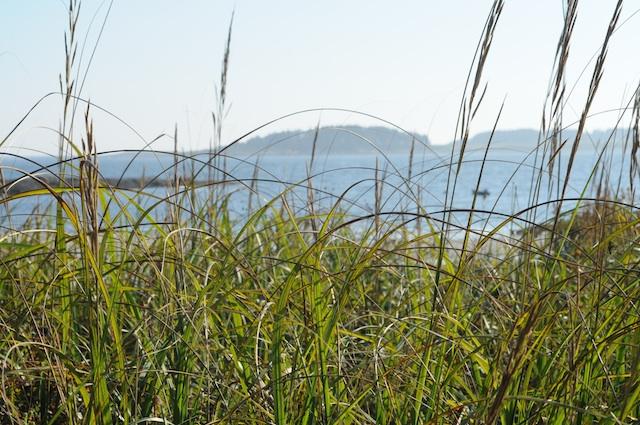 Shore (8)
