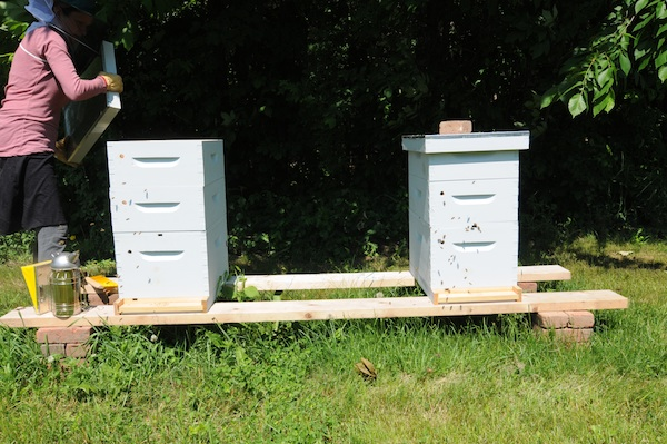 Bees (12)