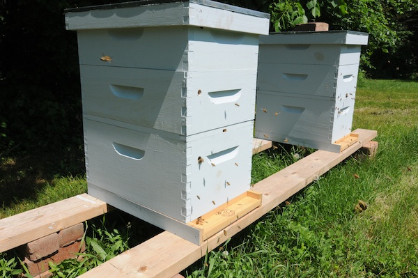 Bees (11)