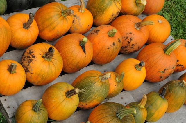 Harvest (6)