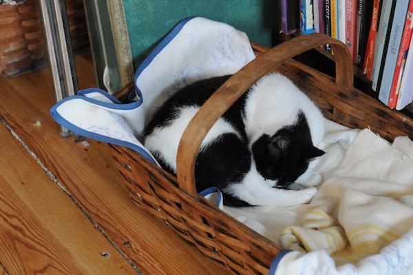 Kittens (8)