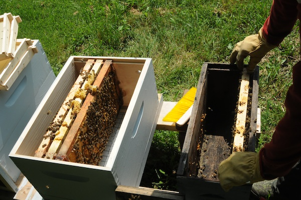 Bees (4)