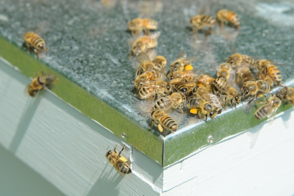 Bees (7)