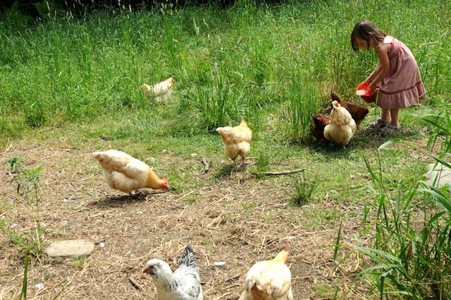 Farm (7)