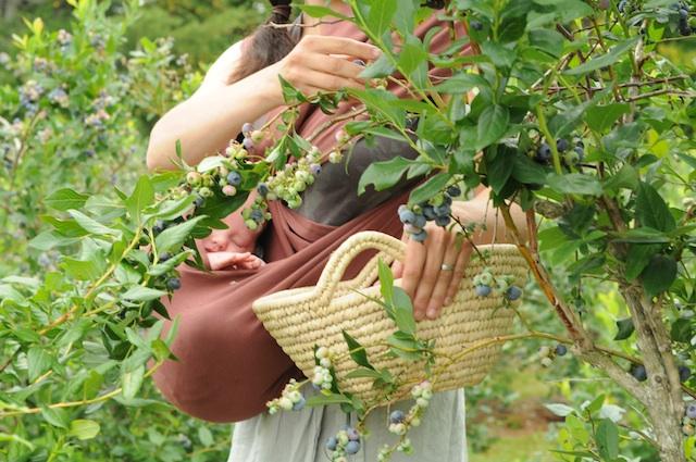 Berries (5)