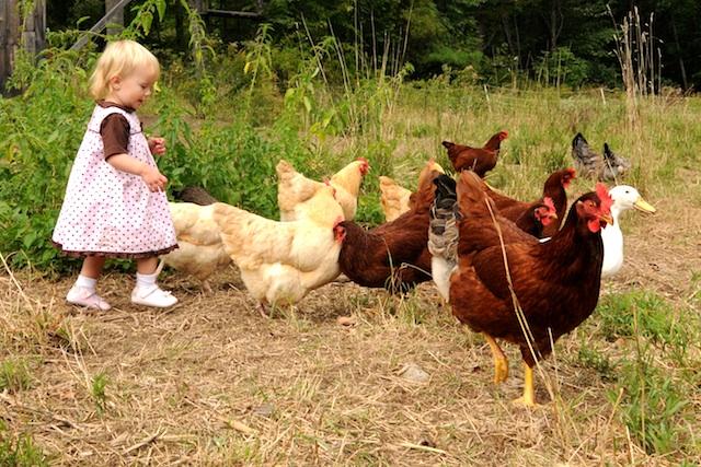 Farm (11)