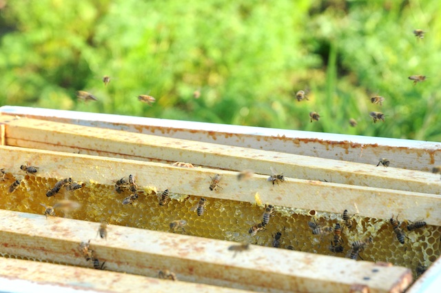 Bees (5)