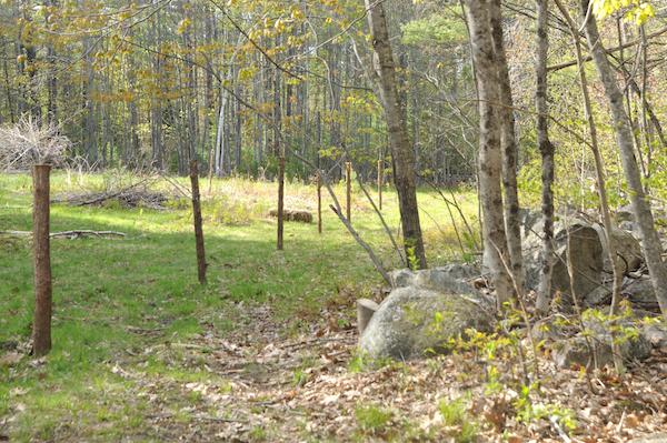 Pasture (4)