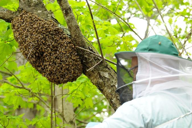 Swarm (3)