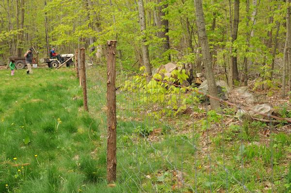 Pasture (11)