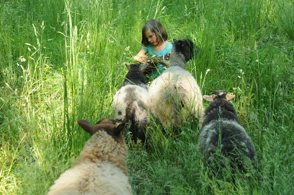 Pasture (8)