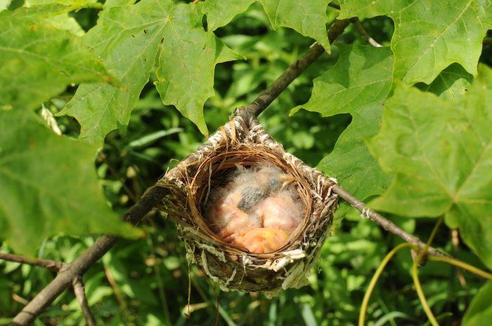Sparrow (1)
