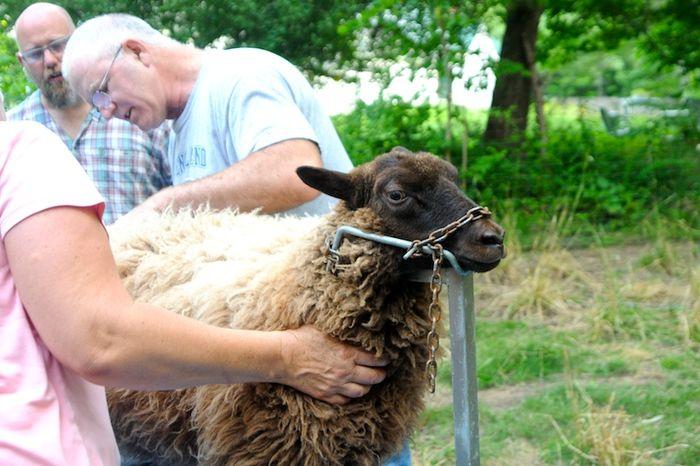 Shear (1)