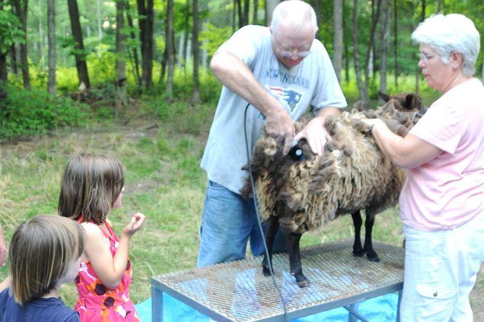 Shear (3)