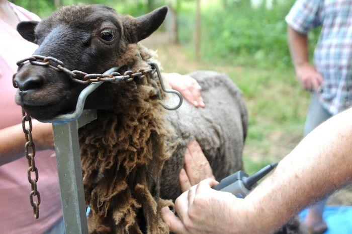 Shear (6)