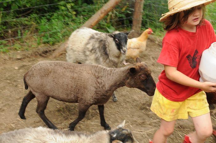 Shear (10)