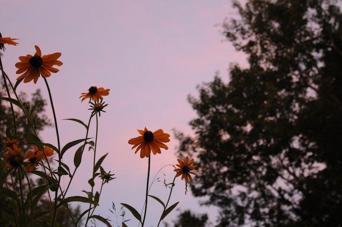 Summer (4)