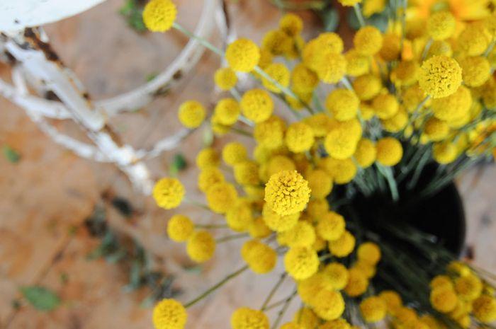 Florabliss-4