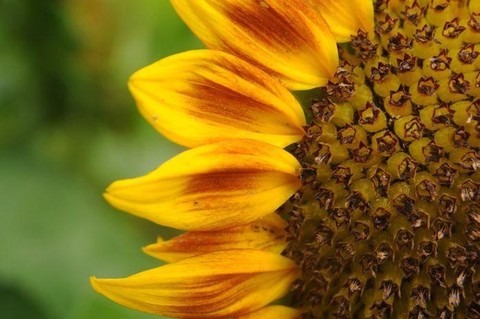 Florabliss-10
