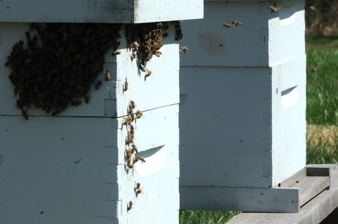 Bees (13)