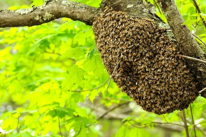 Swarm (2)