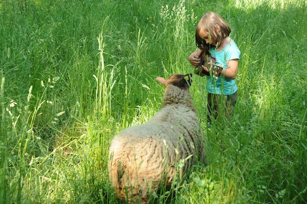 Pasture (9)