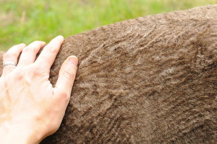 Shear (11)