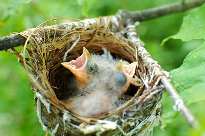 Sparrow (3)