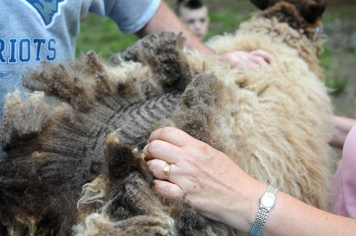 Shear (2)