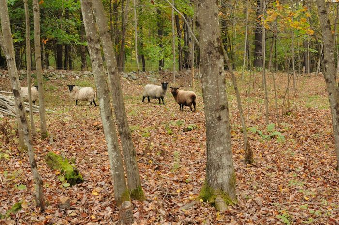 Pasture01-17