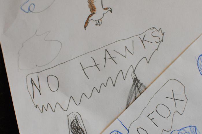 Hawk01-4
