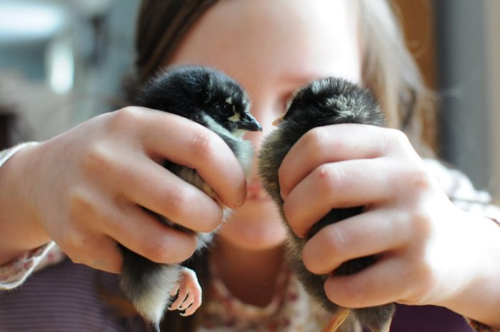 Chicks05