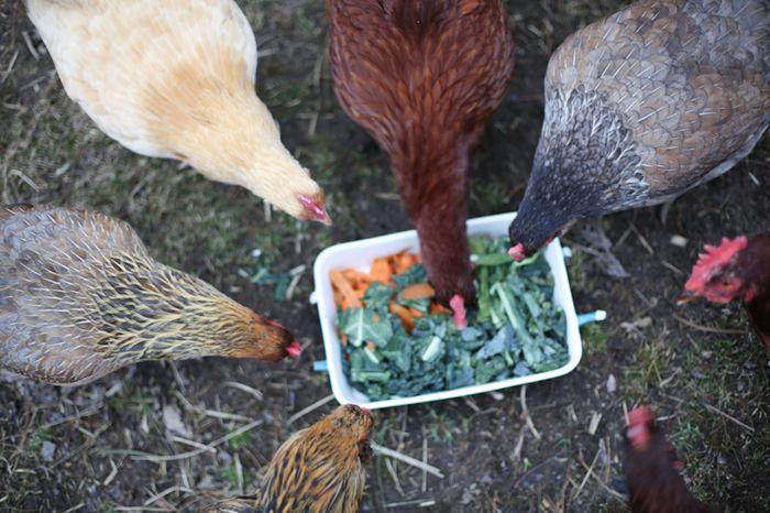 Chickens01-2
