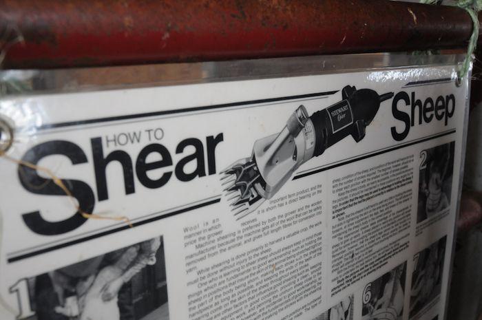 Shear-3