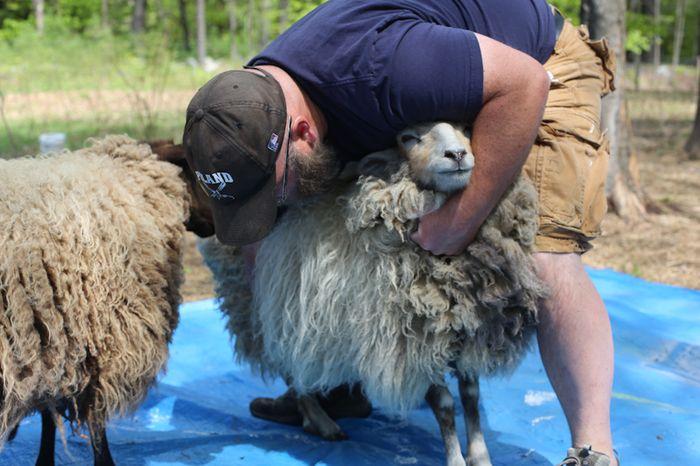 Shear-2