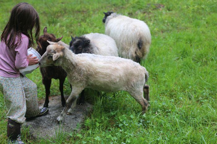 Shear-4-2