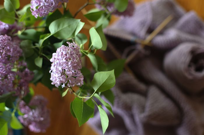 Lilac-2